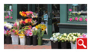 Central Square Florist is located at 653 Massachusetts Avenue. Located right at the corner of Prospect and Massachusetts Avenue in the heart of Central Square